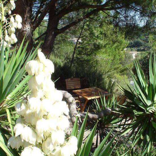 yuccas en fleurs en mai