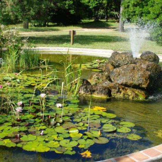 """jardin botanique """"bassin aux nénuphars"""""""