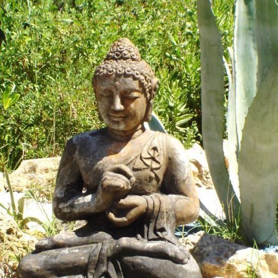 bouddha près des agaves